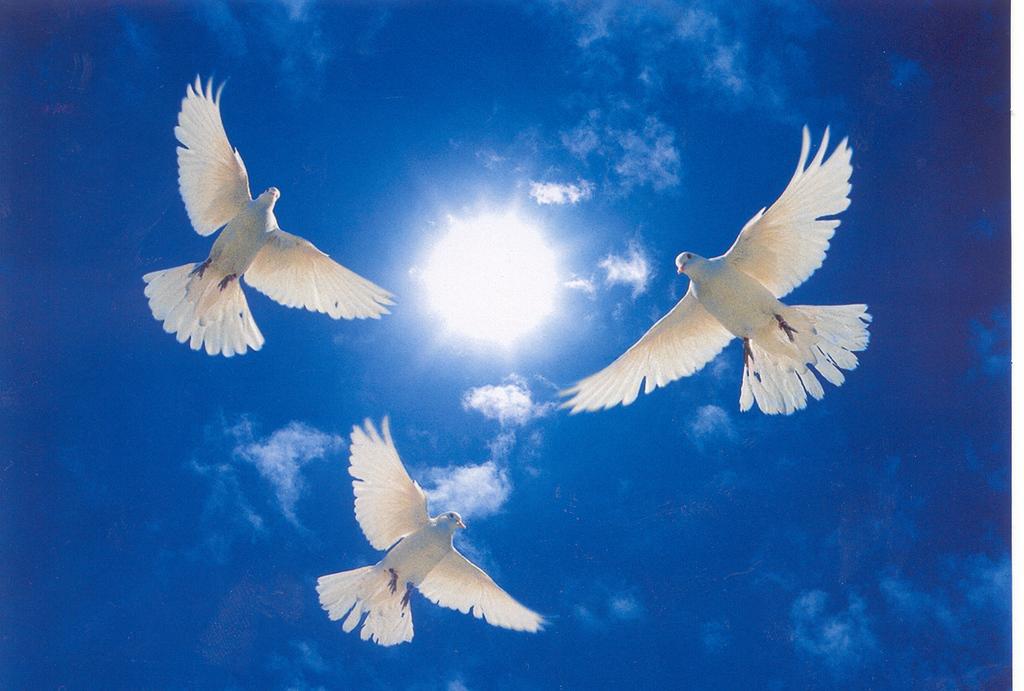 Голубь в небе картинки, своими руками