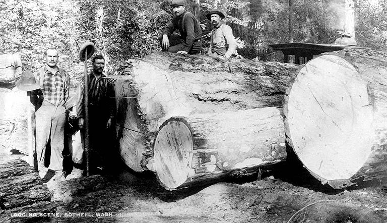 1890 Logging